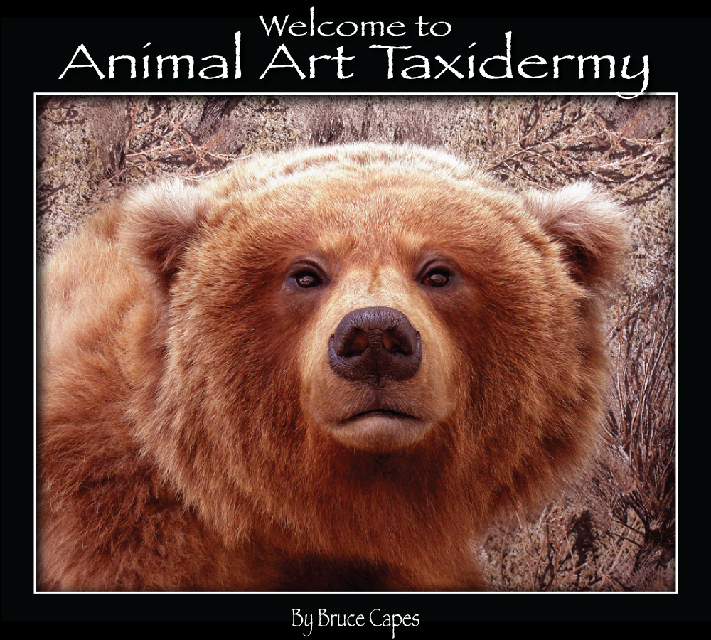 animal art taxidermy
